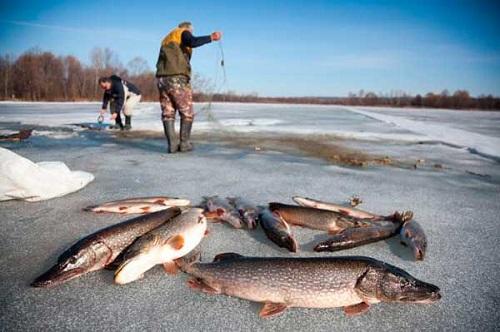 Рыбалка сетями зимой видео