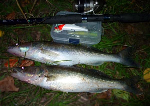 клюет рыба ночью