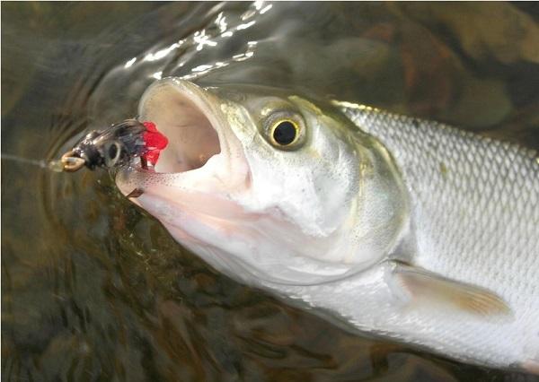 рыбалка в самаре на жереха