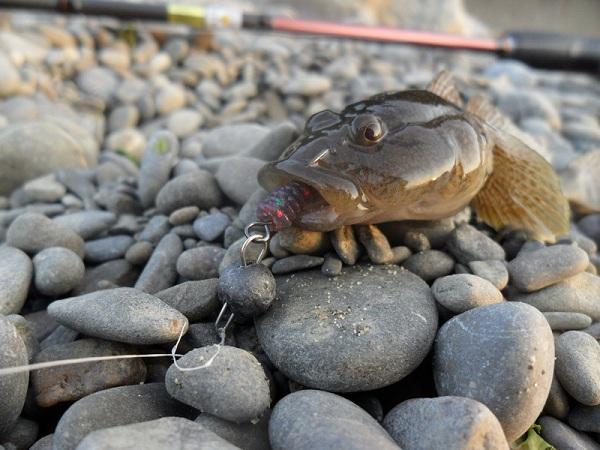 Rokfishing